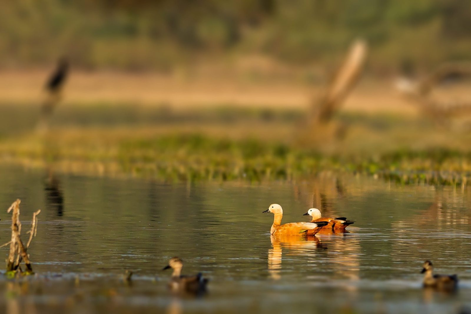 Bharatpur Bird Sanctuary Travelogue